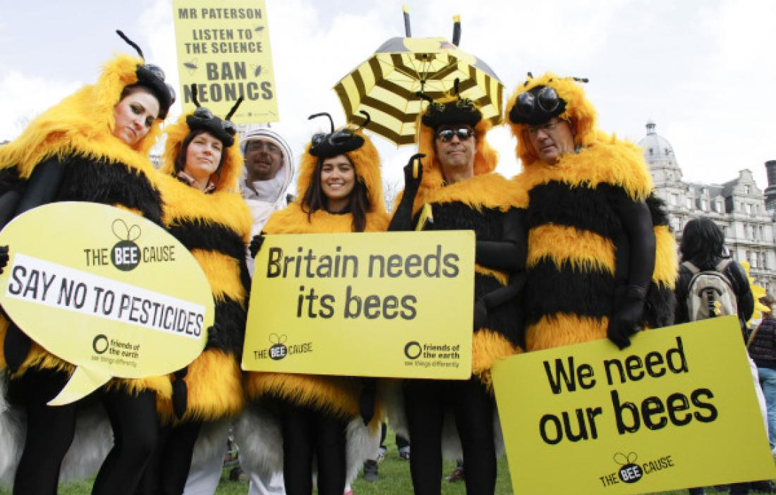 Help protect bees from bee-harming pesticides