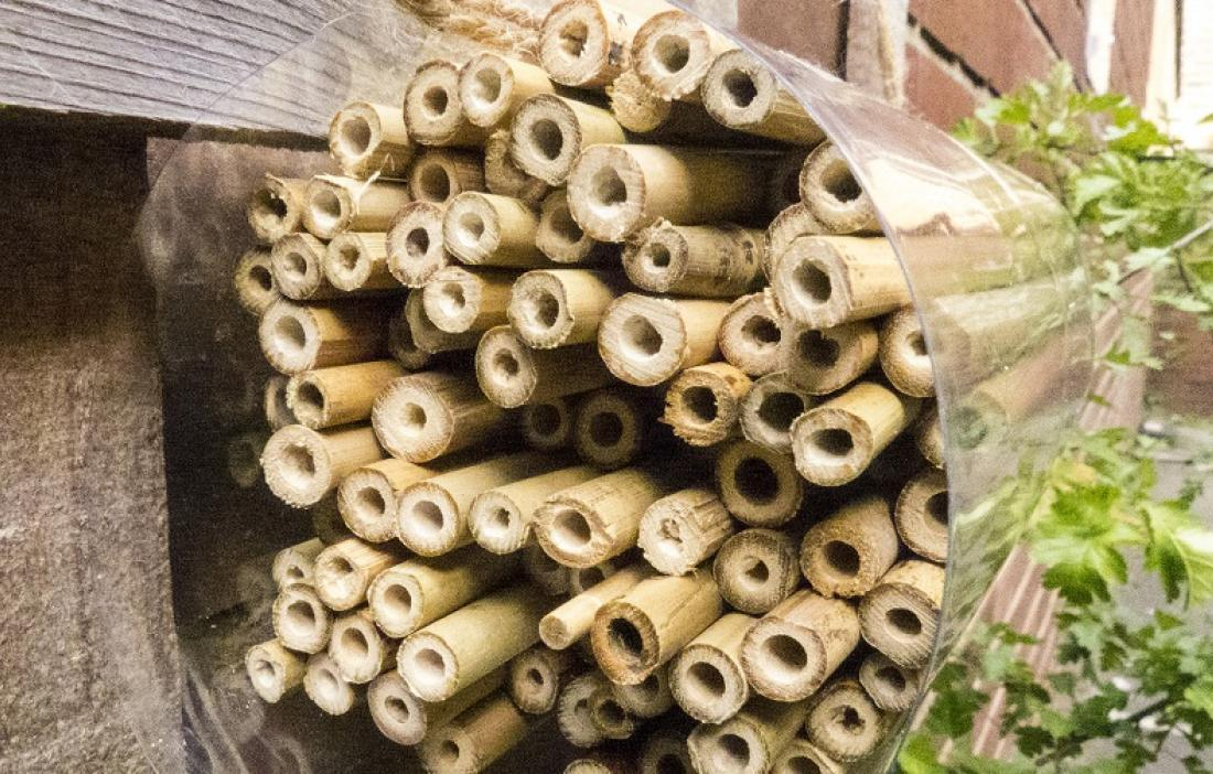 A bee hotel