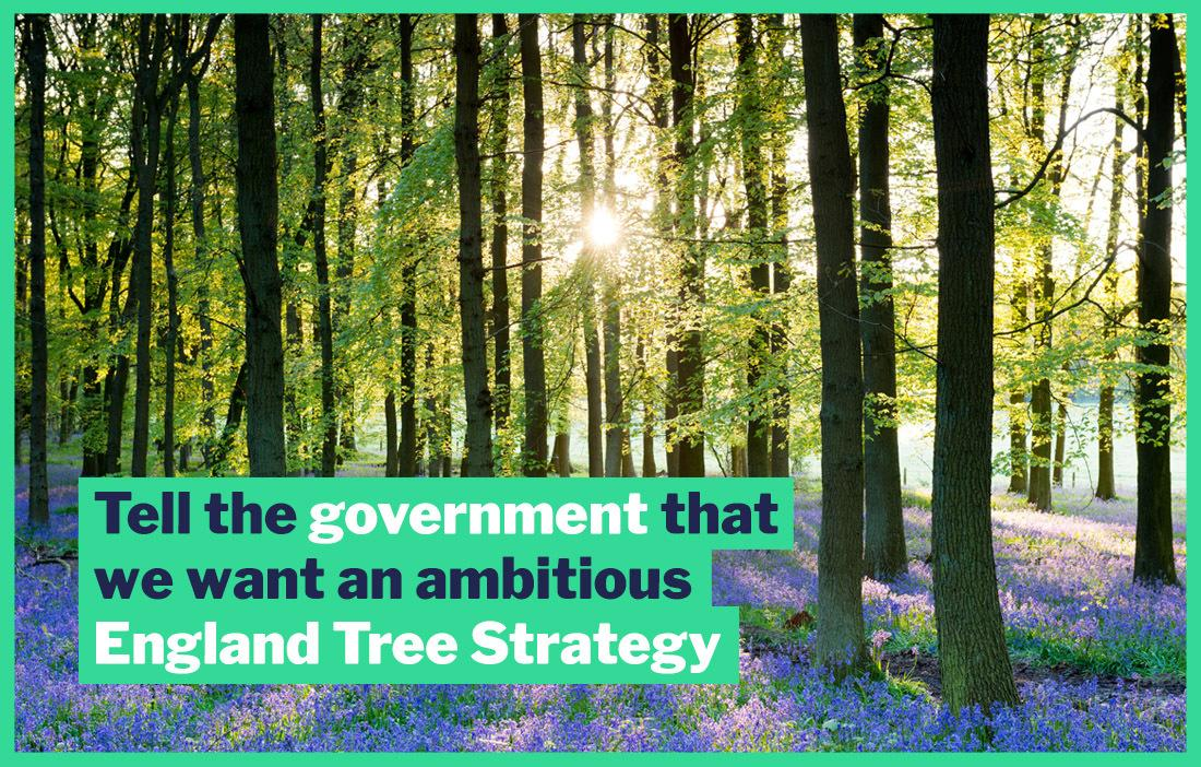 Image of forest with words 'Tell the government we want an ambitious England Tree Strategy'